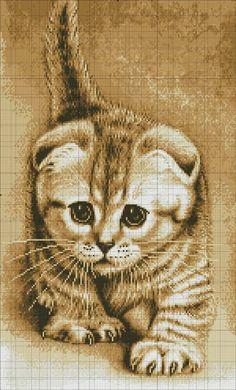 Gallery.ru / Фото #1 - ***** - celita (stalking kitty)