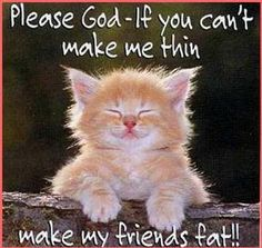 Funny animals pictures with funny text part 5