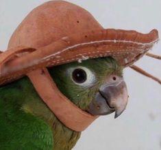 24 Super Ideas For Memes Apaixonados Animais Cute Baby Animals, Animals And Pets, Funny Animals, Funny Birds, Cute Birds, New Memes, Funny Memes, Funniest Memes, Animal Memes
