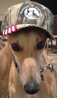 Greyhound from Awesome Greyhound Adoptions