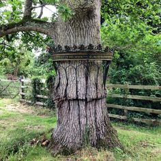 The caged oak tree at Poltimore House, Devon