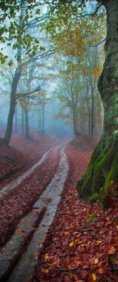 Casentino National Park, Italy