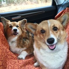 Corgi car ride! #pembrokewelshcorgi
