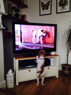 Dolly loves tv