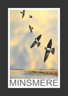 Sand Martins at Minismere (Art Print)