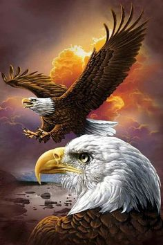 [Visit to Buy] Diy Diamond Painting Animals Birds Eagles Cross Stitch Square Rhinestone Pictures Of Crystals Diamond Embroidery full gear The Eagles, Bald Eagles, Eagles Live, Photo Aigle, Beautiful Birds, Animals Beautiful, Benfica Wallpaper, Aigle Animal, Eagle Pictures