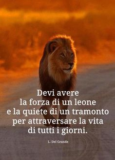 Lion King Quotes, Italian Quotes, Italian Language, Tumblr Quotes, Yoga Meditation, Famous Quotes, Words Quotes, Motivational Quotes, About Me Blog