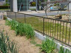 P1000491 Fence, Outdoor Structures, Outdoor Decor, Plants, Home Decor, Decoration Home, Room Decor, Plant, Home Interior Design