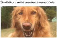 Rolling With It Dog: | The 36 Funniest Dog Pics Known To Man