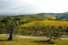 Chianti wine tour in Tuscany