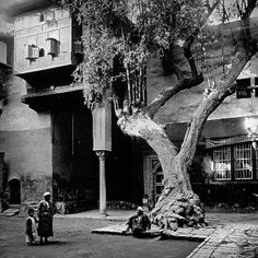 Cairo - Street Scene | This is an old tree.