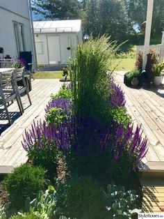 Pergola Designs, Pool Designs, Garden Show, Home And Garden, Colorado Landscaping, Landscape Design, Garden Design, Garden Online, Backyard