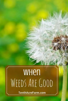 Have you ever wondered why weeds exist? Once you know the secret, you can harness the power of weeds in your garden.