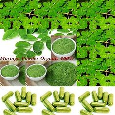 Moringa Oleifera Capsule Organic Vegetarian Capsule for health Herb Anti- Aging# - http://health-beauty.goshoppins.com/dietary-supplements-nutrition/moringa-oleifera-capsule-organic-vegetarian-capsule-for-health-herb-anti-aging/