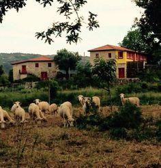 #Quintadoolival, Turismo em espaço rural é mais do que um conceito...é uma forma de estar e de bem receber!