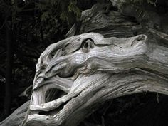 Photo Project: Faces in Nature, the dragon.