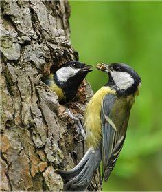 ptaki na pinterest - Szukaj w Google