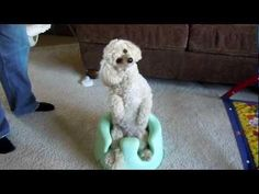 Confused #Dog On Baby's Chair - #funny