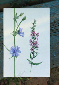 Watercolor sketches by Tanya Severianova, via Behance