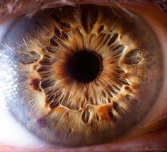 Un ojo con definición