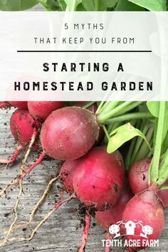 5 Myths That Keep You From Starting a Homestead Garden: Would you like to grow food for your family in your own homestead garden? What's stopping you? Here are five myths that can keep you from getting started. #gardening