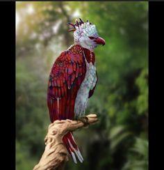 Rare Birds, Exotic Birds, Colorful Birds, Exotic Pets, Unusual Animals, Rare Animals, Animals And Pets, Exotic Animals, Strange Animals