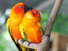 love birds =)