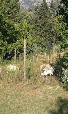 Biologico trentino La Fonte pecore e caprette