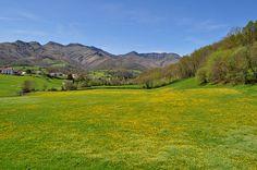 La campagne près de Saint-Etienne de Baïgorry, Basse-Navarre, Pays basque, Pyrénées Atlantiques, Aquitaine, France.