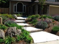 Drought tolerant landscaping with colorful plants replacing the lawn on either side of the walkway.