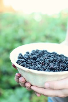 Dreamy Whites: Picking Blackberries  photo credit: Maria Carr