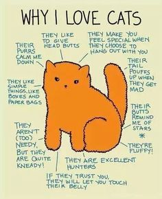 #whyilovecats