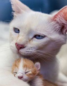I can't resist a good mama and baby pic…….