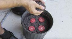 tomater-triks