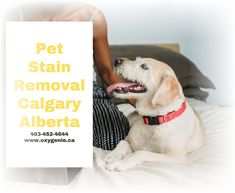 Perfect Image, Perfect Photo, Love Photos, Cool Pictures, Urine Stains, Cleaning Services, How To Clean Carpet, Calgary, Fiber