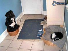 Hund und Katze, Austausch, Korridor