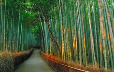 Kyoto`s Beautiful Bamboo Corridor at the Foot of the Mountain