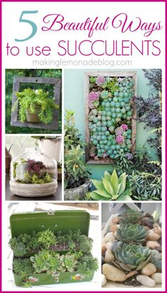 """Use your """"junk"""" to hold succulents and plants-- tons of great ideas here.  #succulents #gardening"""