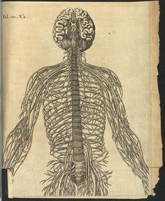 """thegetty: """"René Descartes studied anatomy and physiology, as well as philosophy. But his """"Treatise of Man"""" went unpublished during his lifetime, since he feared condemnation by the Inquisition. It was published in Latin after his death as """"De Homine"""". Andreas Vesalius, Philosophy Major, Brain Diagram, Human Nervous System, Wellcome Collection, The Inquisition, Man Go, Anatomy And Physiology, Types Of Art"""