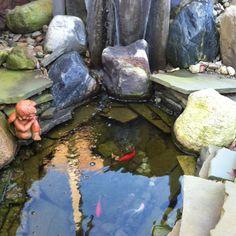 Our backyard koi pond.