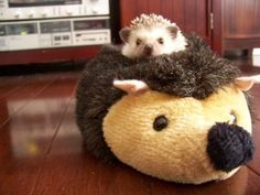 Hedgehog with Stuffed Hedgehog