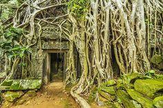 Ta Prohm Temple. Cambodia #taprohm #green #temple #trees #roots #travel #allshots_ #ig_mexico #igworldclub #jaw_dropping_shots #global_hotshotz #master_pics #ig_exquisite #ig_worldclub #ig_shotz_le #ig_shotz_october #water_shots