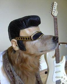 Lustige Halloween Kostüme für Hunde oder Katzen: You're nothing but a hound dog...