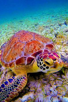 Underwater Friend by Cary Quinn on , turtle sea ocean Beautiful Creatures, Animals Beautiful, Cute Animals, Animals Sea, Nature Animals, Beautiful Children, Fauna Marina, Turtle Love, Sea Turtle Art