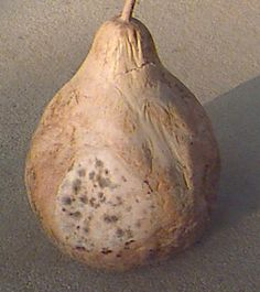 rotten gourd-how to dry your gourds properly