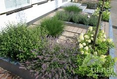 Very Small front garden. Small Front Gardens, Small Garden Design, Garden Inspiration, Garden Ideas, Yard Landscaping, Beautiful Gardens, Landscape, Green, Plants