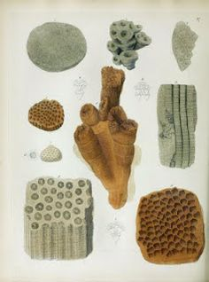 A Pictorial Atlas of Fossil Remains (1850), with descriptions by Gideon Mantell