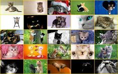 Carte virtuelle Chats http://www.hotels-live.com/cartes-virtuelles/chats.html #CartePostale #Wallpaper