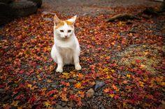 古都・京都にくらす猫たち