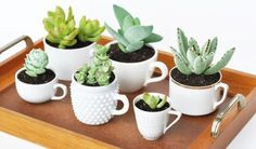 Teacup recipe suggestion: A group of succulents in all white… - Sukkulenten Garten Cacti And Succulents, Planting Succulents, Potted Plants, Cactus Plants, Garden Plants, Indoor Plants, House Plants, Planting Flowers, Succulent Planters